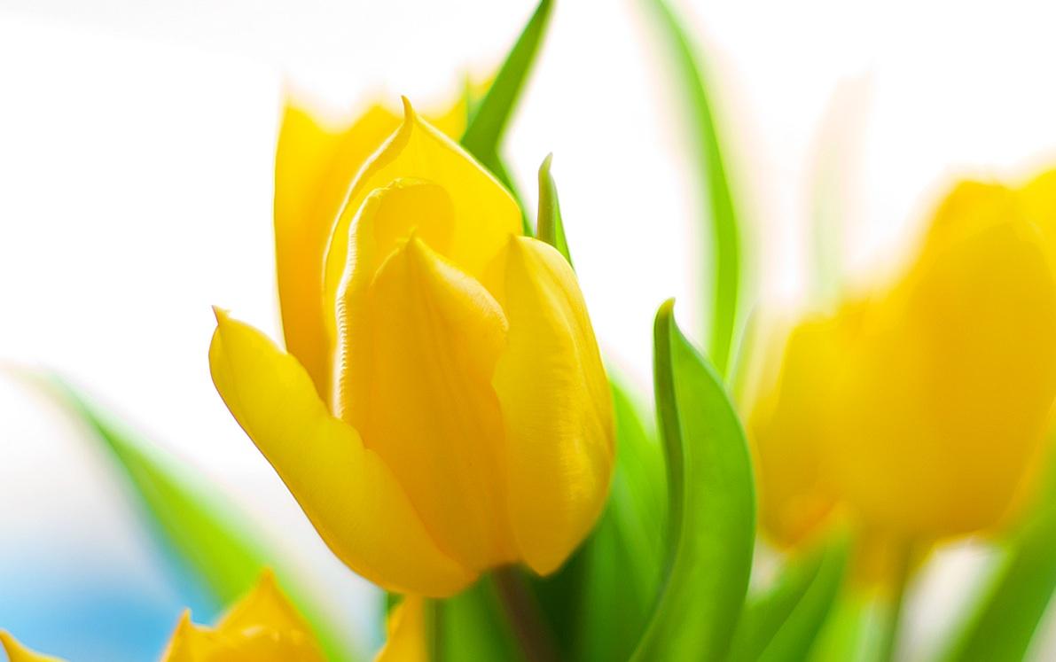 Sveiki džiaugsmingai sulaukę pavasario